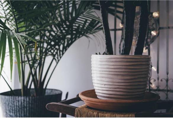 The Magic of Indoor Plants