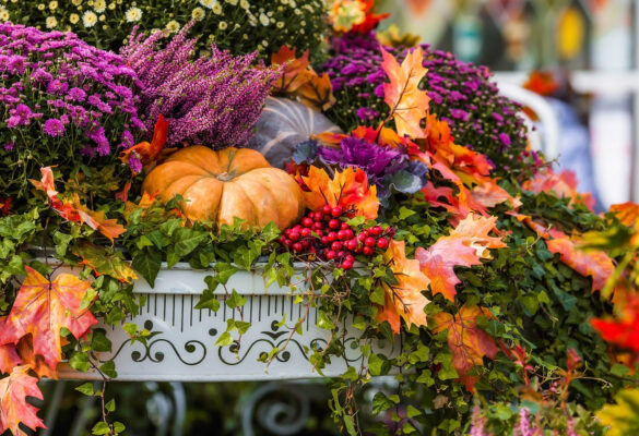 fall flowers with pumpkin